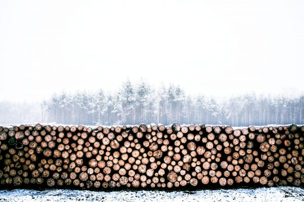 FSC® and PEFC™ Certification Review From The Timber Industry