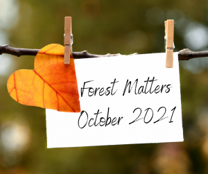 FSC® Forest Matters October 2021